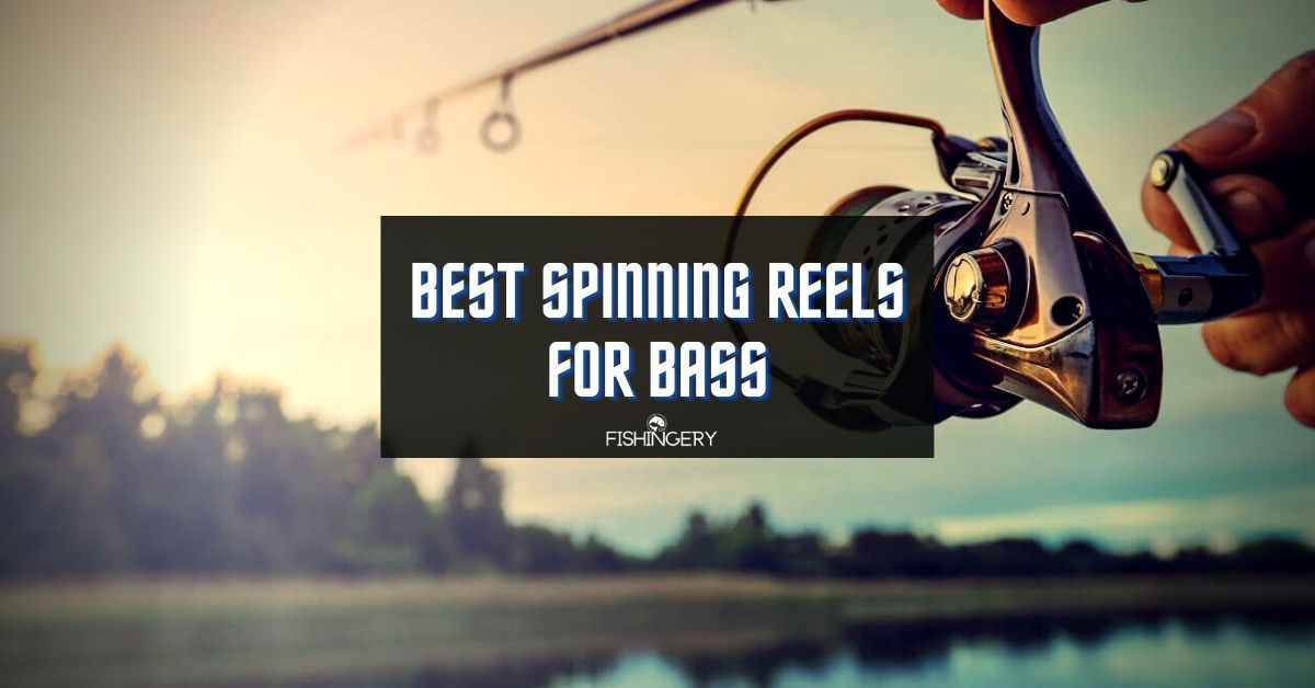 Best Spinning Reels For Bass Fishing