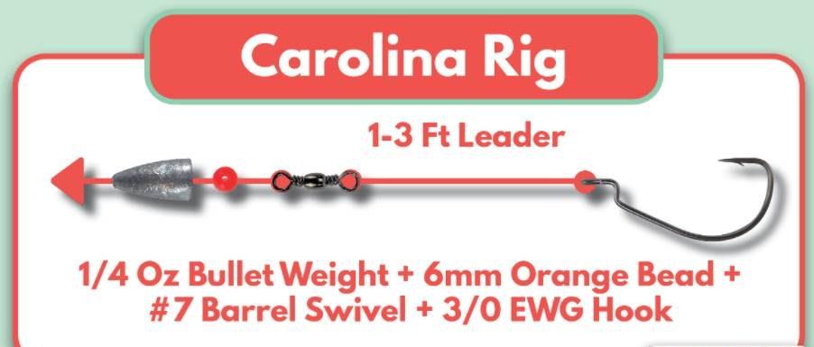 An Infographics of Carolina Rig