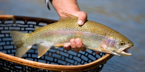 Image of a person holding trout fish in hand