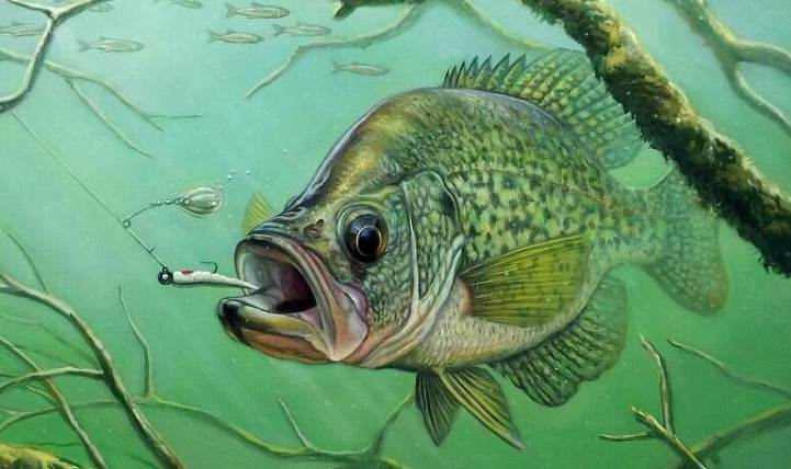 Image of the Crappie Fish
