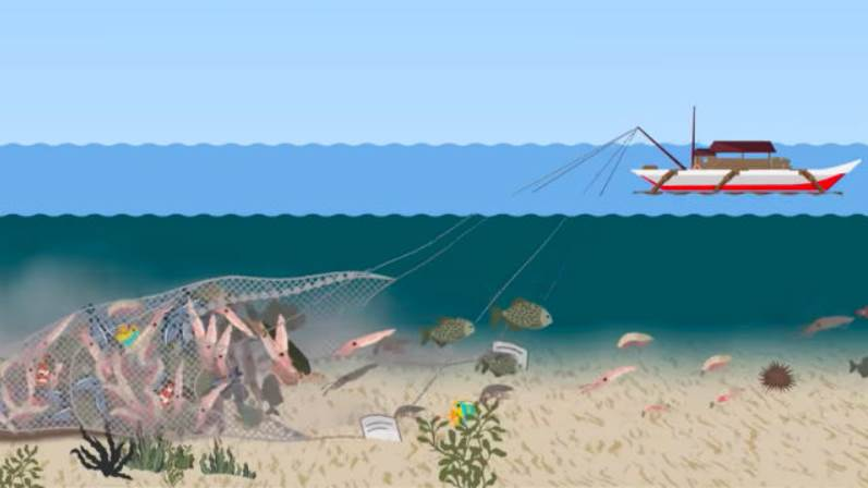 Infographic of how the Bottom trawling method