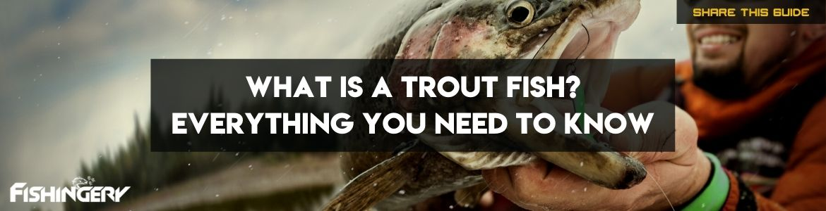 What is a Trout FIsh