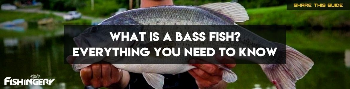 how to fish for bass