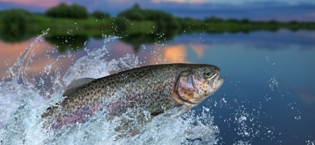 image of a fish splashing out of water