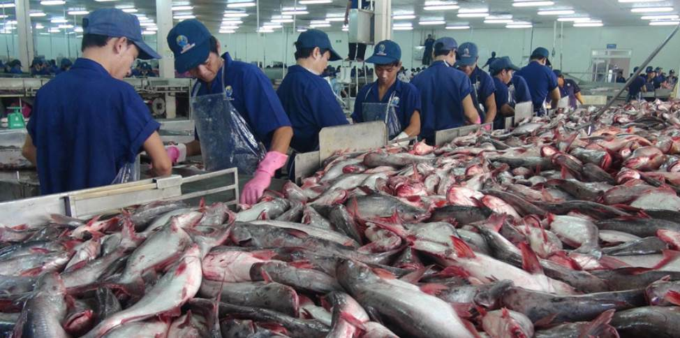 image of fish getting ready for exports