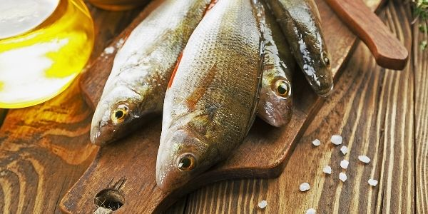 image of four dead perch fish
