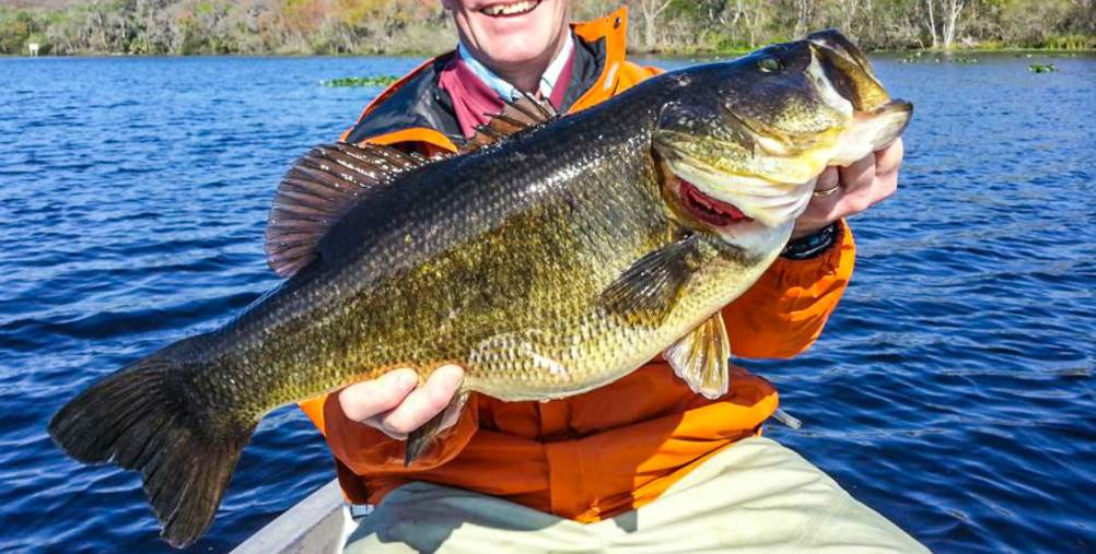image of the Largemouth Bass