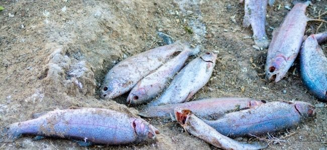 image of thrown fishes