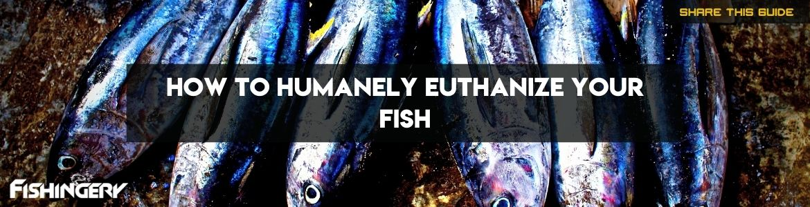 How To Humanely Euthanize Your Fish