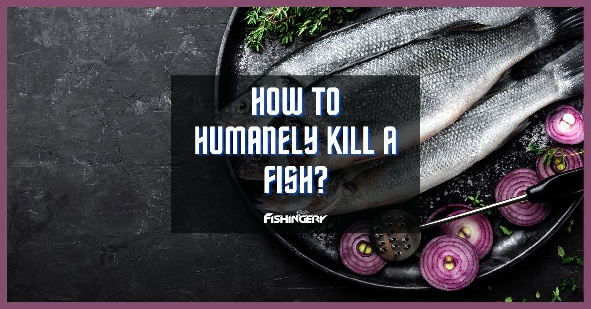 How To Humanely Kill A Fish