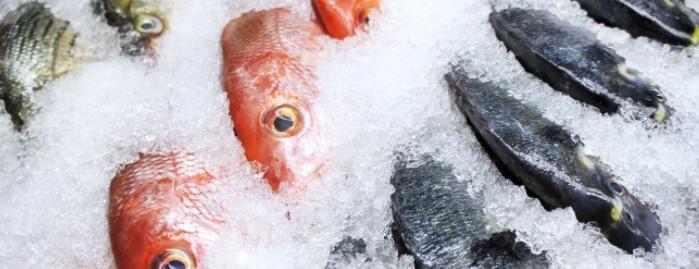 Putting fish inside the freezer